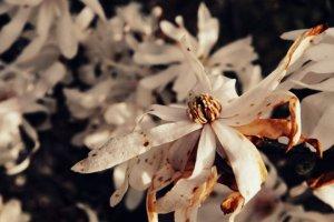 blog pix joanna's flower pix